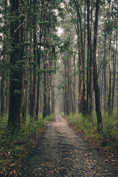 Long Forest Path