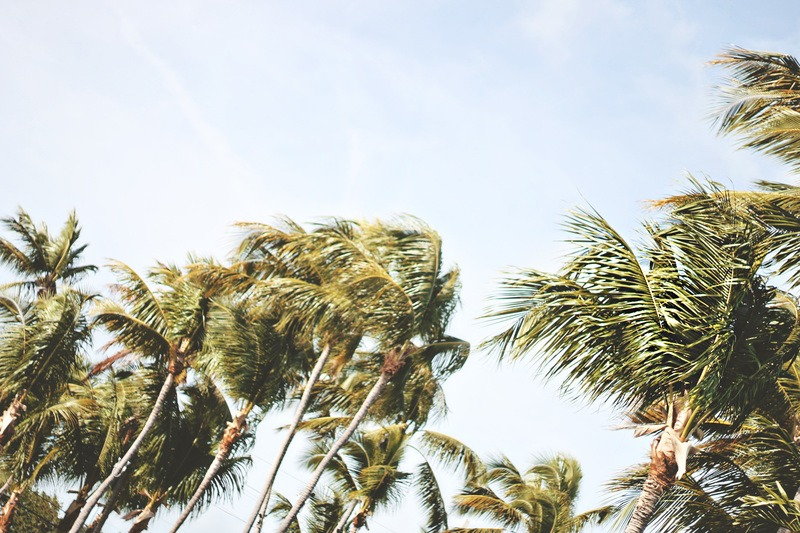 Low-Angle Photography of Green Coconut Trees