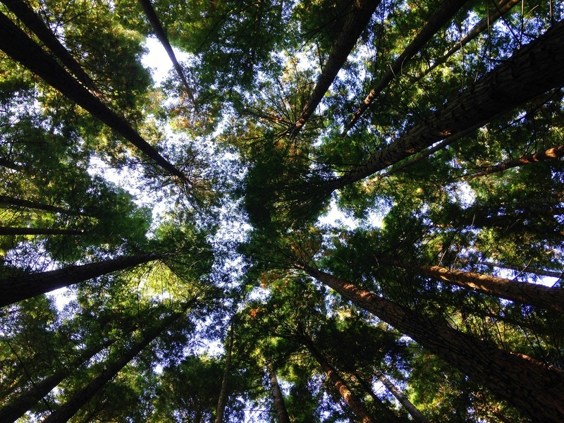 Low-Angle Photography of Tall Tress