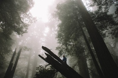 Low Angle Photography of Trees on Forest