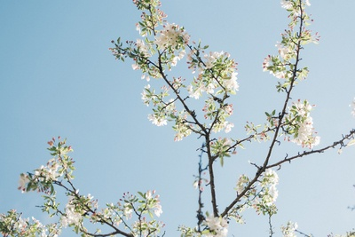 Low Angle  White Petaled Flowers in Bloom