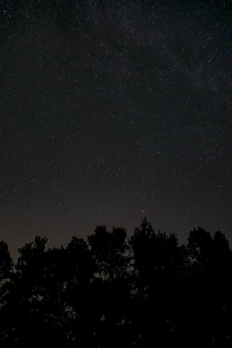 Low Angle of Starry Night