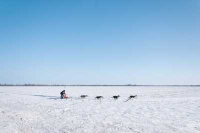 Man And Four Dogs on Snow Field