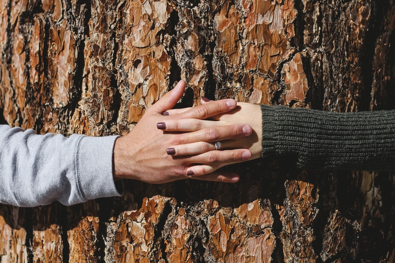 Man And Woman Hand Connecting on Tree Trunk