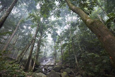 Misty Forest River