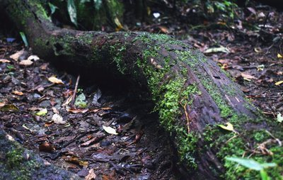 Mossy Tree Trunk On Forest Floor