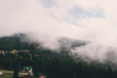 Mountains Covered with Trees with Fogs y Skies