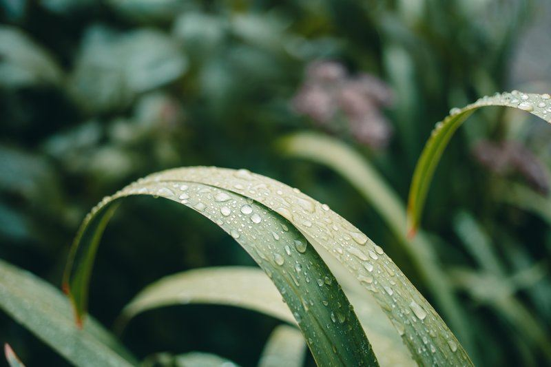 Nature Close Up Plant Water Droplets On Leaf