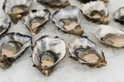 Oysters in Shells
