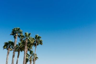 Palm Trees Underneath The Clear Blue Sky