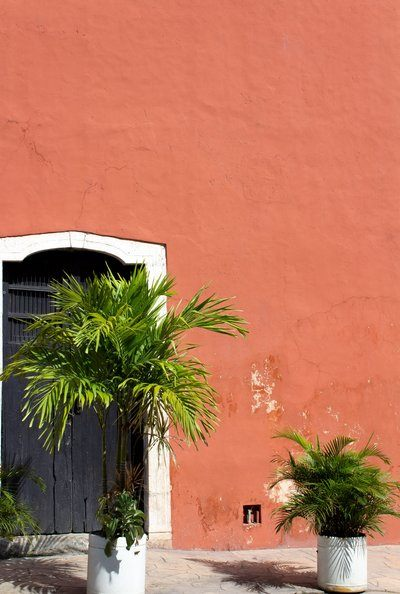Palms Against A Red Plaster Wall