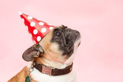 Party Hat Frenchie