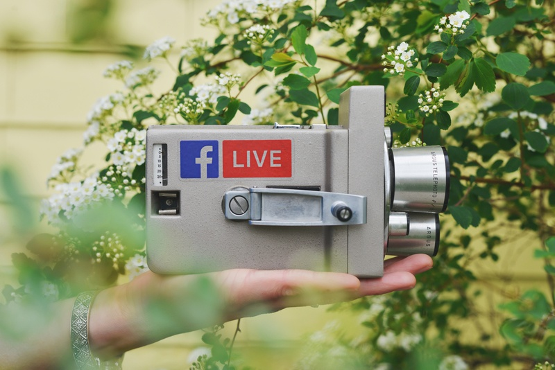 Person Holding Gray Video Camera Near Green Leaf Plant