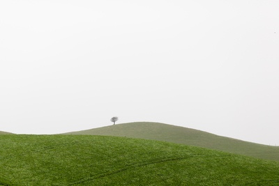 Photography of Green Grass