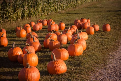 Photography of Pumpkins on Ground