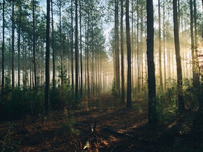 Photography of Tall Trees