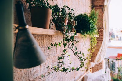 Plant Pots Sit On Wooden Shelf In Balcony