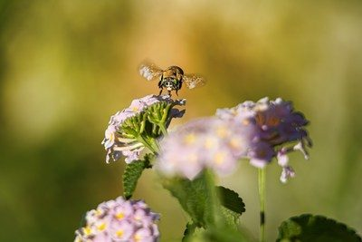 Portrait of a bee on a flower