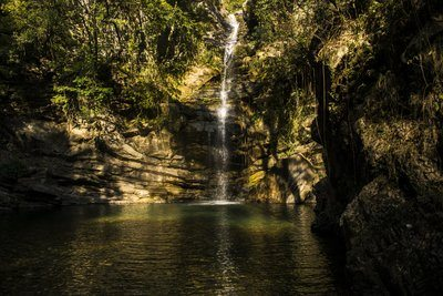 Rainforest River Falls Into Watering Hole