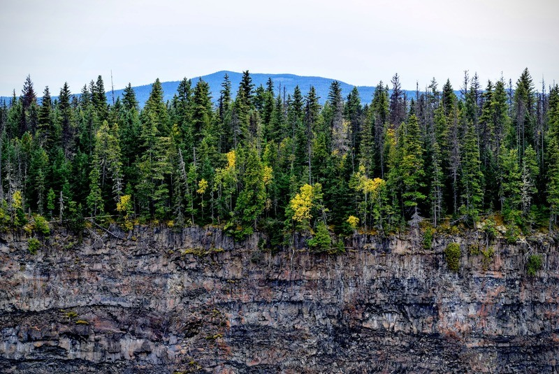 Rocky Mountain with Trees