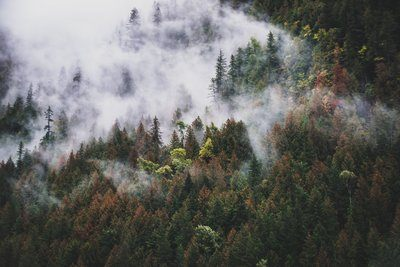 Rolling Fog Crawls Down Thick Forested Hills