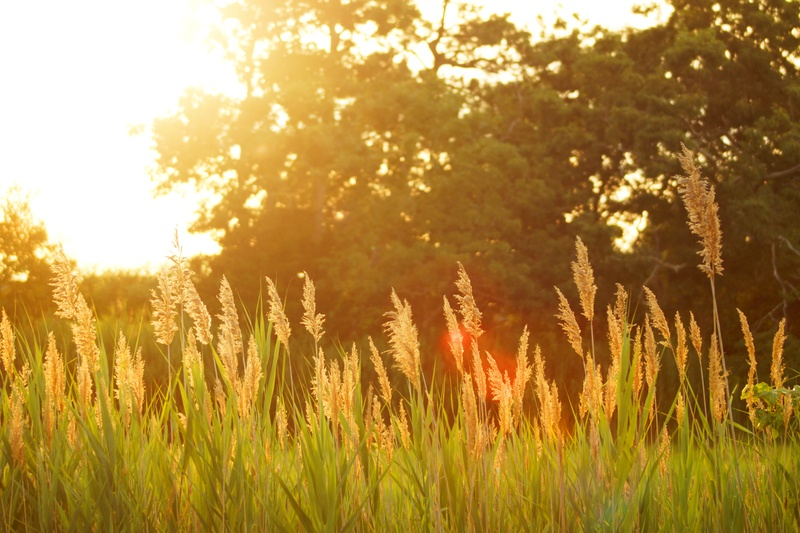 Scenery of A Grassfield at Sunset