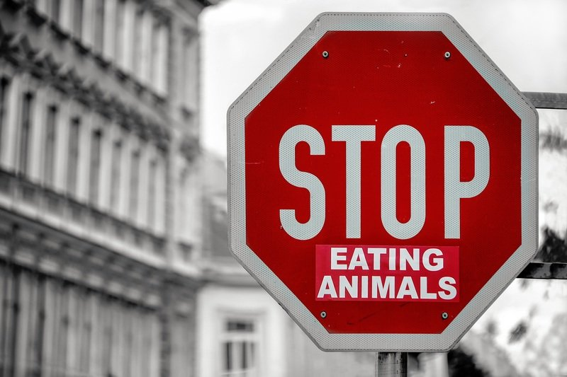Selective Color of Stop Eating Animals Signage