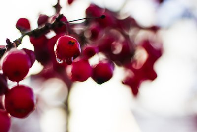 Selective Focus  Berries