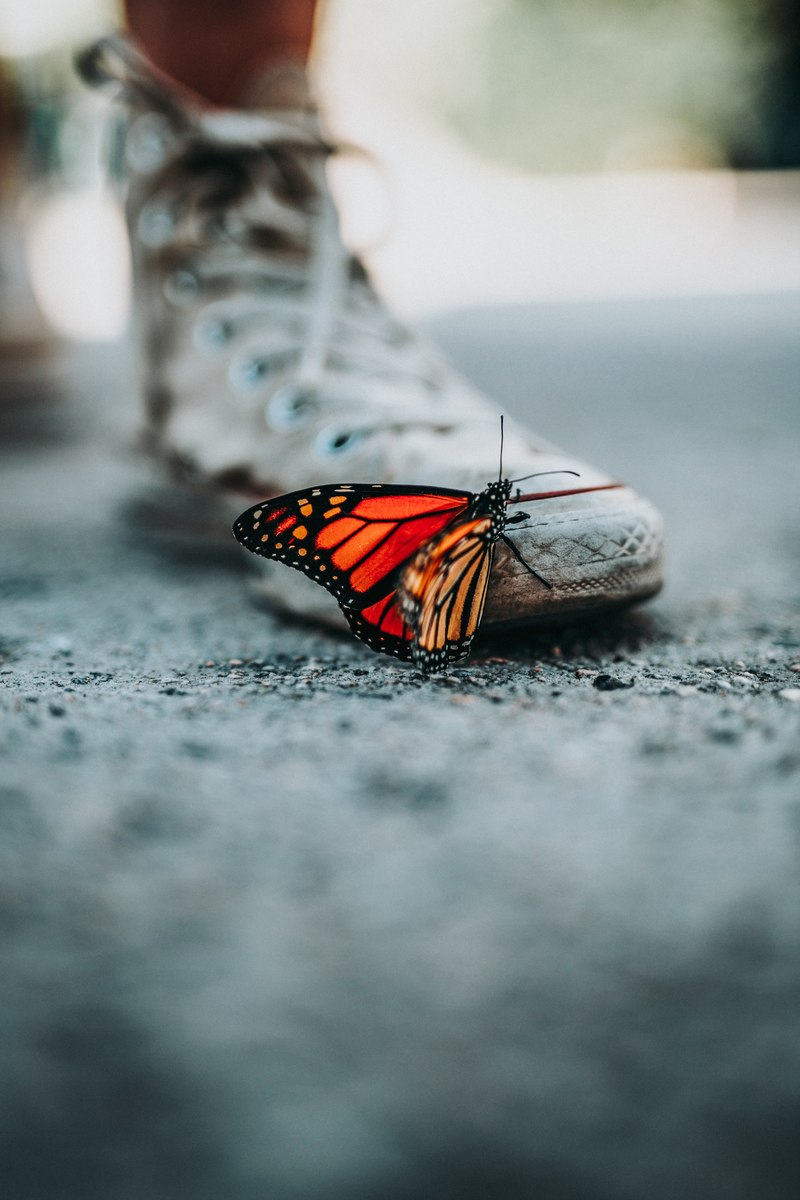 Selective Focus  Butterfly on Shoe