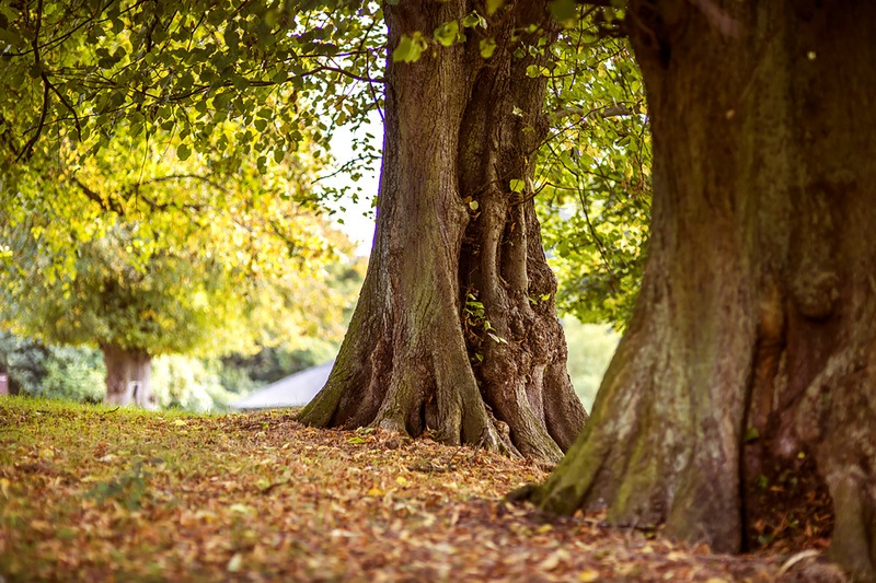 Shallow Focus Photography of Brown Trees