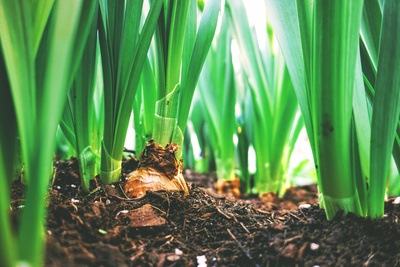 Shallow Focus Photography of Green Leafed Plants