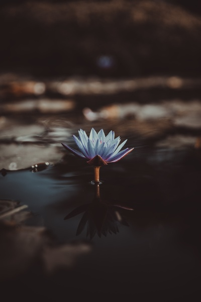 Shallow Focus Photography of Green Lotus in Water