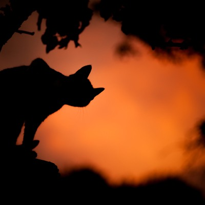 Silhouette A Chat