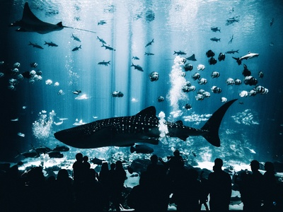 Silhouette Group of People Standing in Front of Blue Whale on
