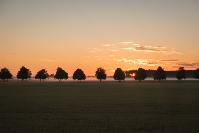 Silhouette  Trees And Field During Dawn