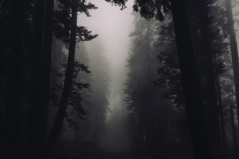 Silhouette  Trees with Foggy Weather