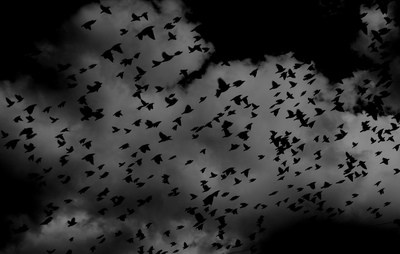 Silhouette of Flock of Birds on Sky