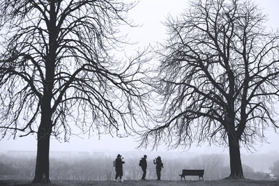 Silhouette of Three Person Standing Between Leafless Trees