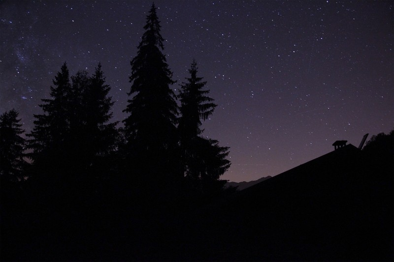 Silhouette of Trees at Nighttime