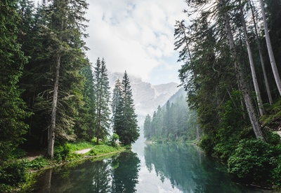 Small Lake Surrounded By Pine Trees