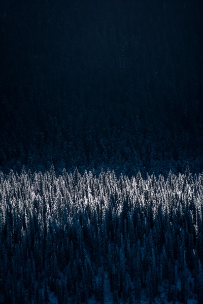Snow-Capped Trees