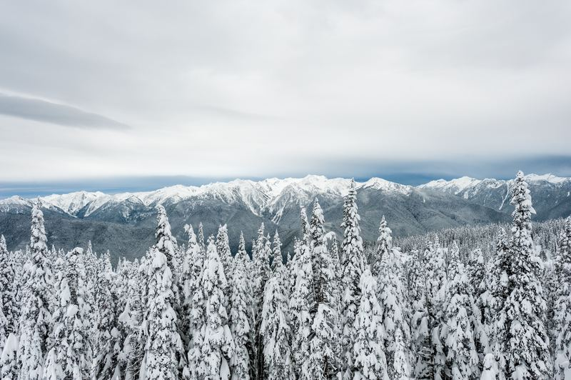 Snow-Covered Mountains and Forest