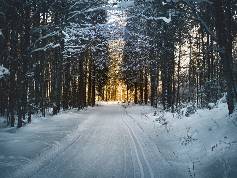 Snow-Covered Trees And Road