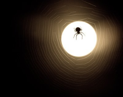 Spider And Web Moonlight Silhouette