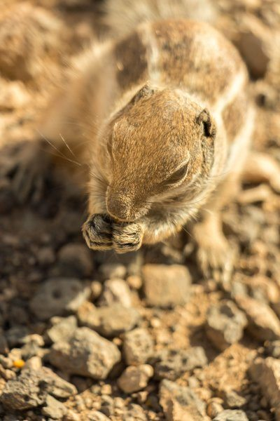 Squirrel Eating Seeds On Rocky Ground