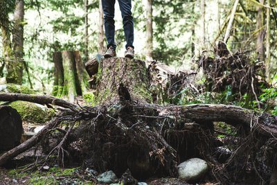 Standing On Top Of Tree Trunk