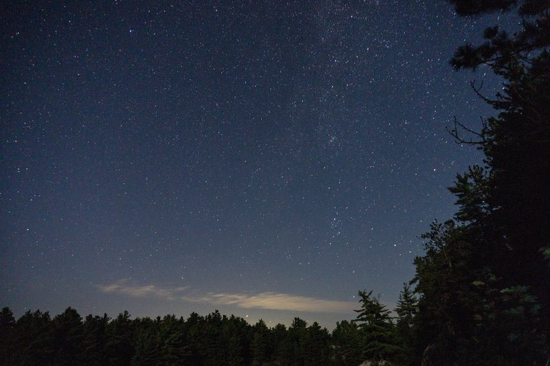 Starry Night Sky Over Forest