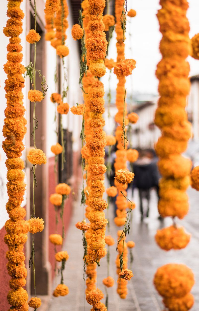 Strings Of Marigolds Hung On The Street