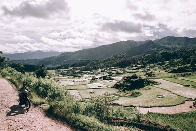 Sunshiney Indonesian Valley Filled With Rice Paddies