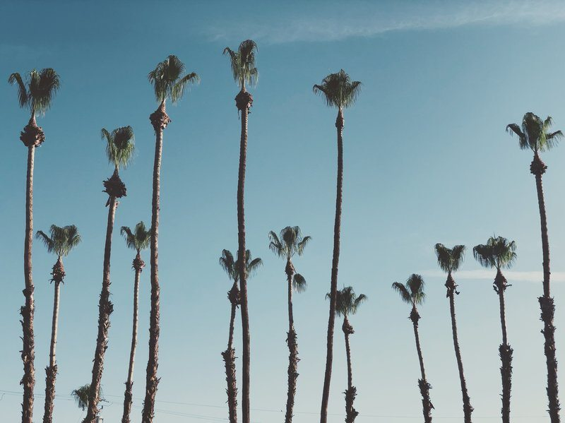 Tall Palm Trees In The Sun